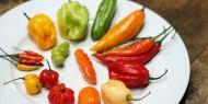 Comer pimenta ajuda a viver mais